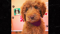 Steph Curry Drops $3,800 On Adorable New Puppy (PHOTOS)