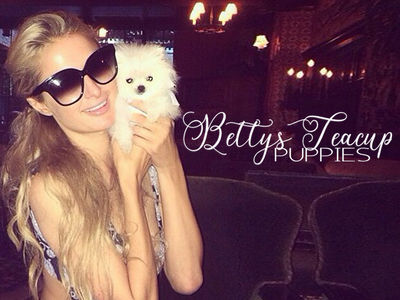 Paris Hilton's Teacup Dog Broker Accused Of Puppy Scam