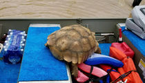Tortoise Rescued in Houston During Harvey Relief Efforts