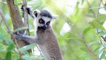 Richard Branson's Necker Island Torn Apart by Irma, Some Exotic Animals MIA (UPDATE)