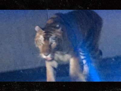 Tiger Shot By Cops In ATL After Attacking Dog Near Fast Food Joint