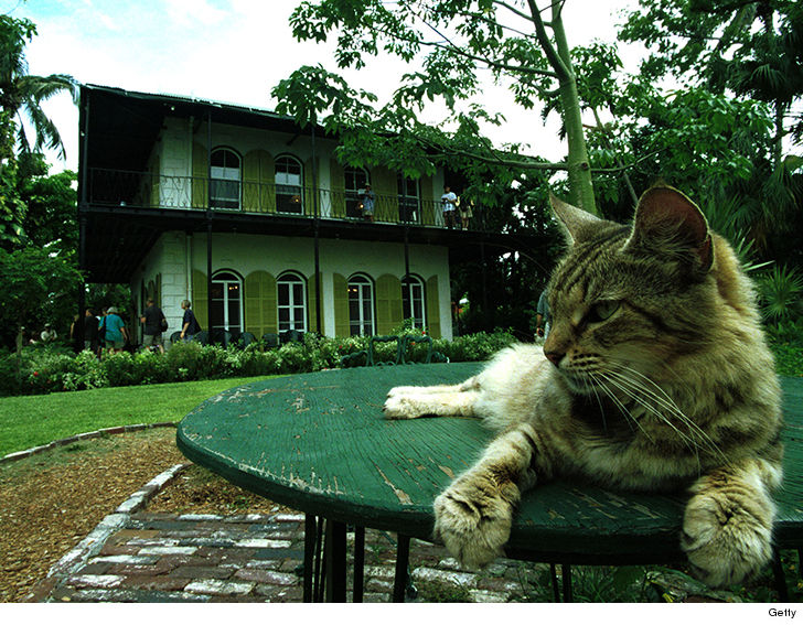 Hemingway Museum Curators, Cats Ride Out Hurricane in Key West