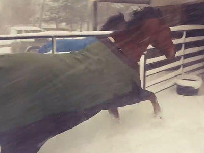 Horses Immediately Regret Going Out in the Snow