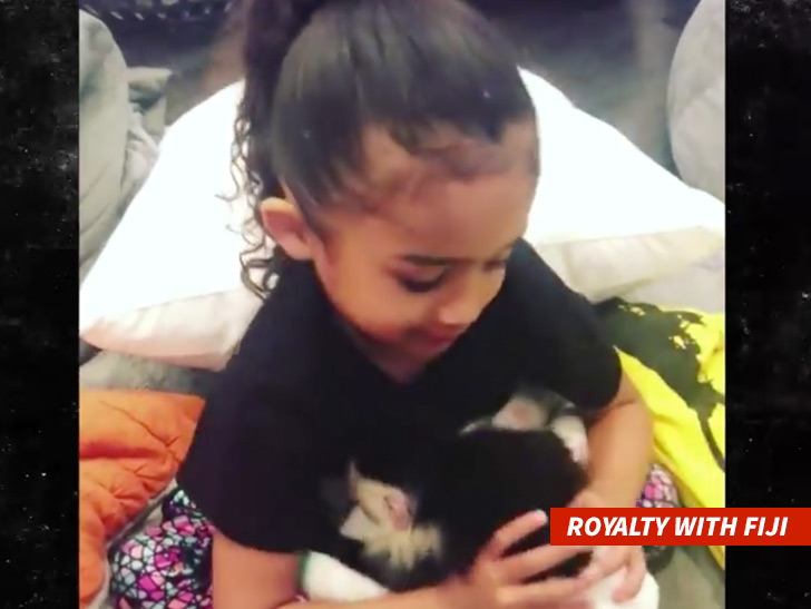 Chris Brown's pet monkey could land him in trouble