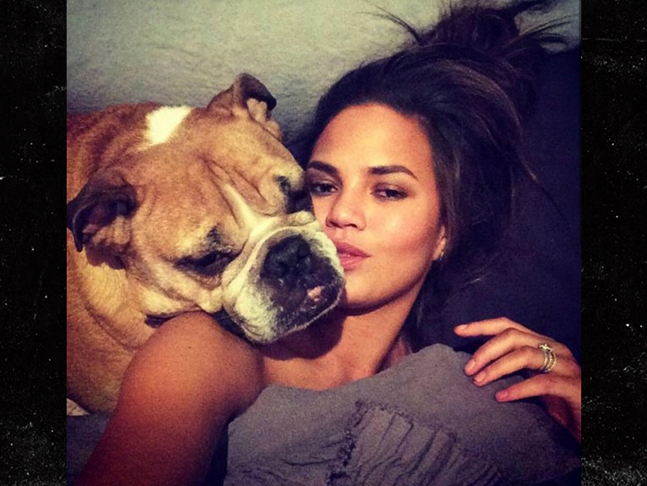 Chrissy Teigen's beloved dog Puddy dies: 'I will miss you every day'